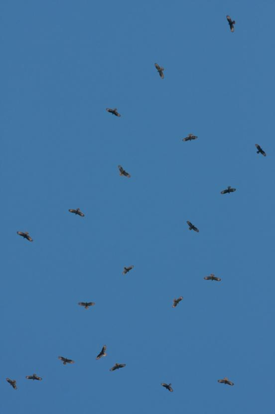 Migrating ...