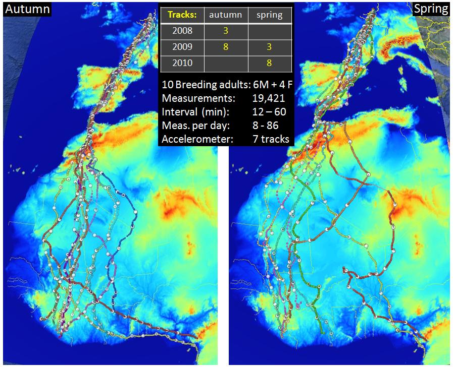 Individual decision rules of migrating honey buzzards uva bits fig 1 overview of migration tracks obtained from autumn 2008 till spring 2009 projected over digital elevation model and summary of measurement schemes gumiabroncs Images